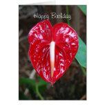 Flor roja C del lirio del Anthurium del corazón de Felicitacion