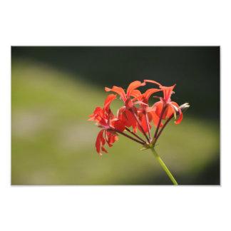 Flor roja cojinete