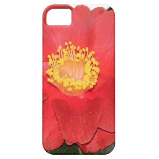 Flor roja de Camelia iPhone 5 Fundas