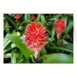Flor roja de Hawaii Felicitaciones