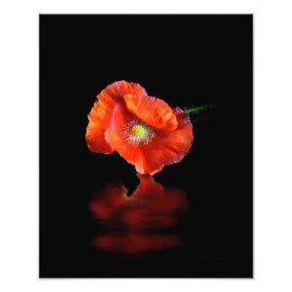 Flor roja de la amapola