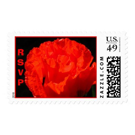 Flor roja de la amapola de maíz sellos