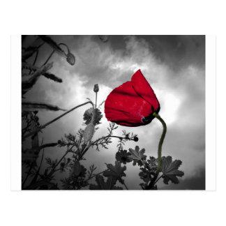 Flor roja de la amapola en el cielo blanco y negro tarjeta postal
