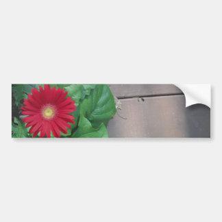 Flor roja de la margarita de Gerber Etiqueta De Parachoque