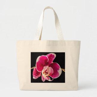 Flor roja de la orquídea bolsas
