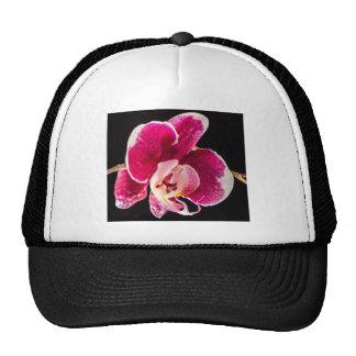Flor roja de la orquídea gorro de camionero