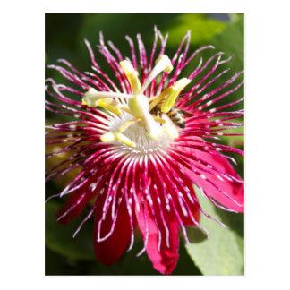 Flor roja de la pasión con la abeja