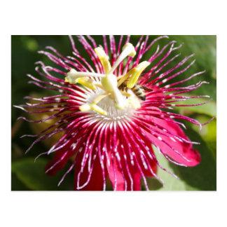 Flor roja de la pasión con la abeja postal