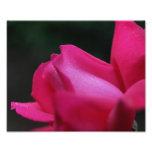 Flor roja de las gotas de agua 10x8 del capullo de cojinete