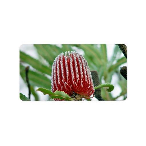 Flor roja del Banksia Etiquetas De Dirección