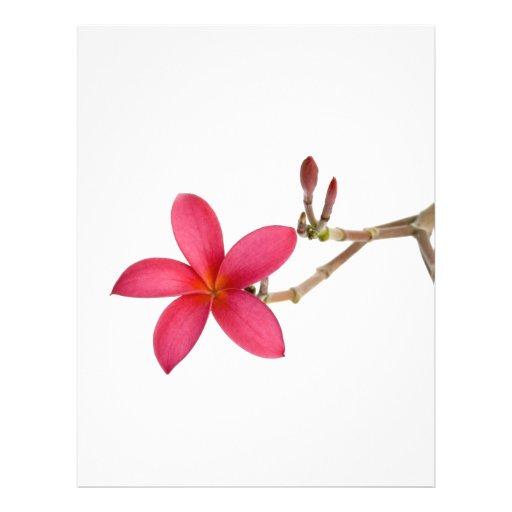 Flor roja del Frangipani Tarjetas Informativas