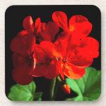 Flor roja del geranio posavasos de bebida