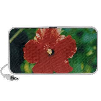 Flor roja del hibisco altavoz