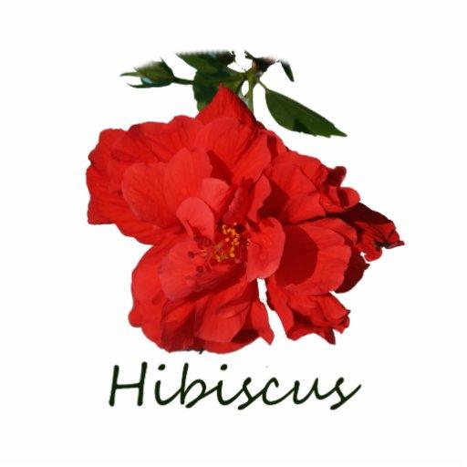 Flor roja del hibisco con el texto esculturas fotograficas