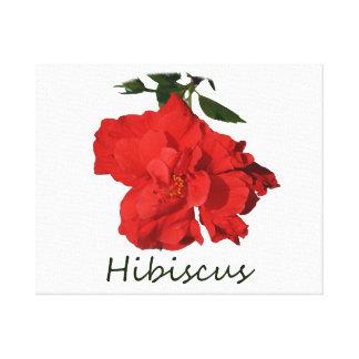 Flor roja del hibisco con el texto lona estirada galerias