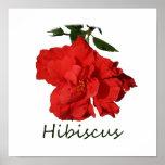 Flor roja del hibisco con el texto poster
