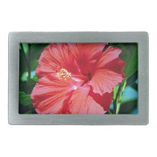 Flor roja del hibisco hebilla cinturon rectangular