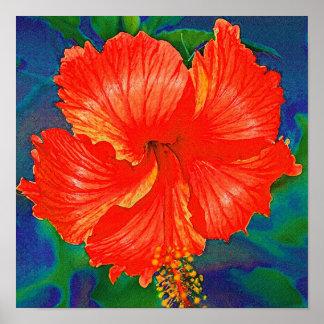 Flor roja del hibisco poster