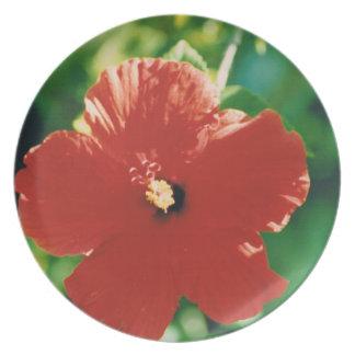 Flor roja del hibisco plato para fiesta