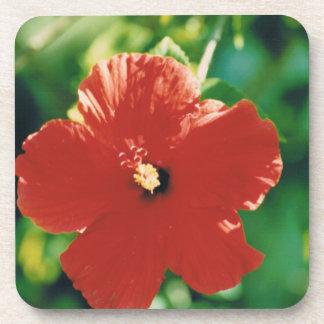 Flor roja del hibisco posavaso