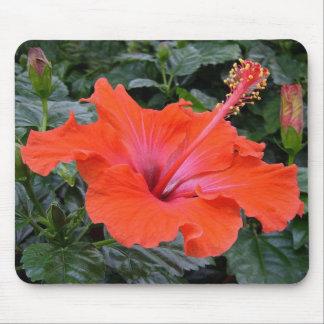 Flor roja del hibisco tapete de raton