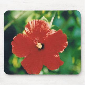 Flor roja del hibisco tapetes de ratón