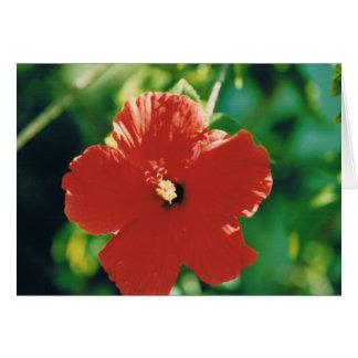 Flor roja del hibisco tarjeta de felicitación