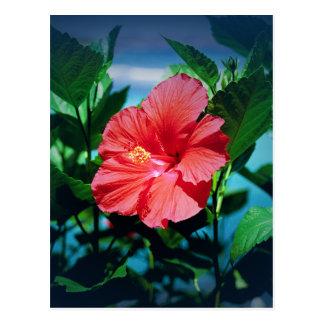 Flor roja del hibisco tarjetas postales