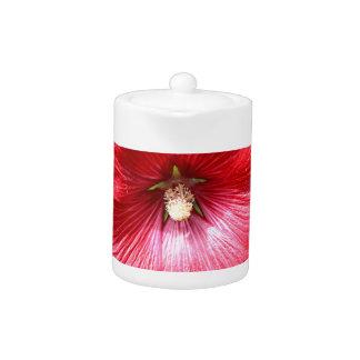 Flor roja del hollyhock en la floración