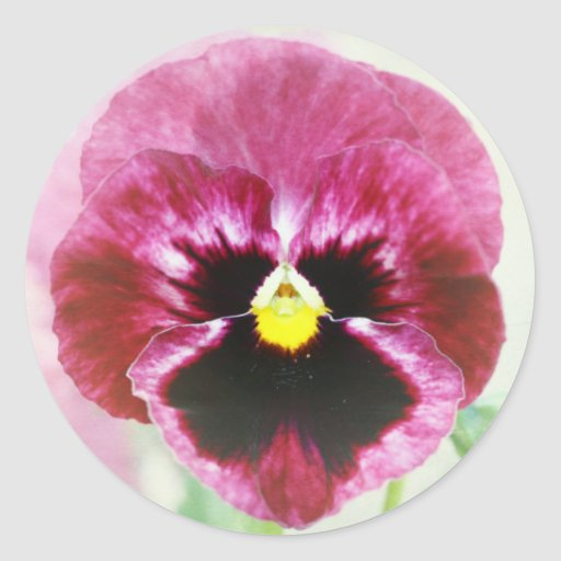 Flor roja del pensamiento de Borgoña Pegatina Redonda