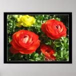 Flor roja del ranúnculo impresiones
