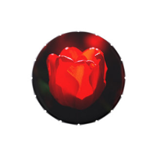 Flor roja del tulipán - fuego latas de dulces