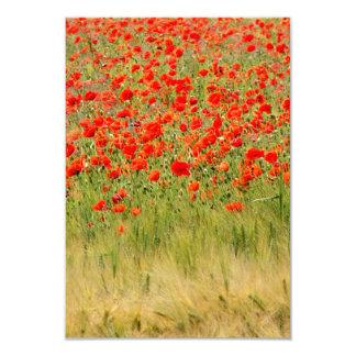 """flor roja del verano invitación 3.5"""" x 5"""""""