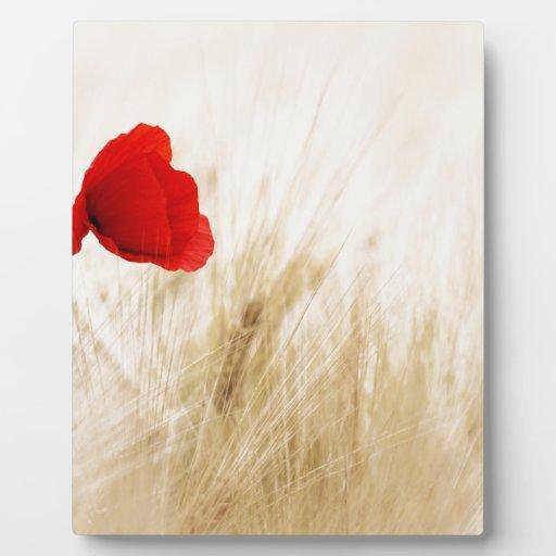 Flor roja en campo placas de plastico