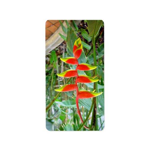 Flor roja formada pico hermoso etiqueta de dirección