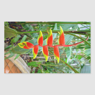 Flor roja formada pico hermoso rectangular pegatinas