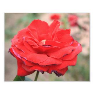 Flor roja foto