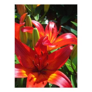 Flor roja fotografia