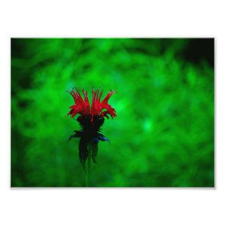 Flor roja fotografía