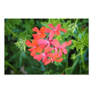 Flor roja fotografías