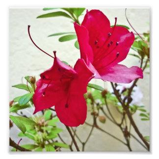 Flor roja fotos
