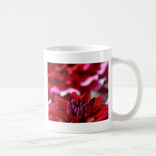 Flor roja hermosa de la dalia tazas