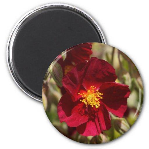 Flor roja iman