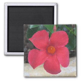 Flor roja imán cuadrado