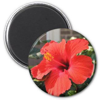 Flor roja imán redondo 5 cm