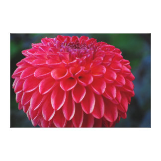 Flor roja impresión en lienzo