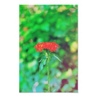 Flor roja impresiones fotográficas