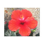 Flor roja lona envuelta para galerías