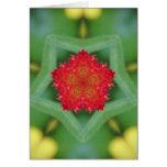 Flor roja Pentágono