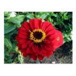 Flor roja postales